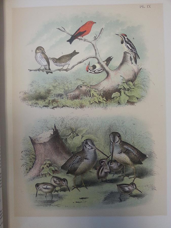 birds-e-sm